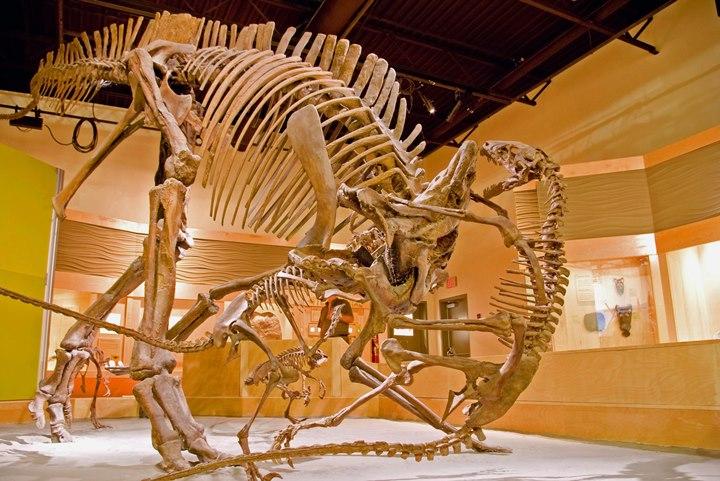 Парк динозавров «Дайносор»