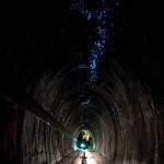 Waitomo Caves 4
